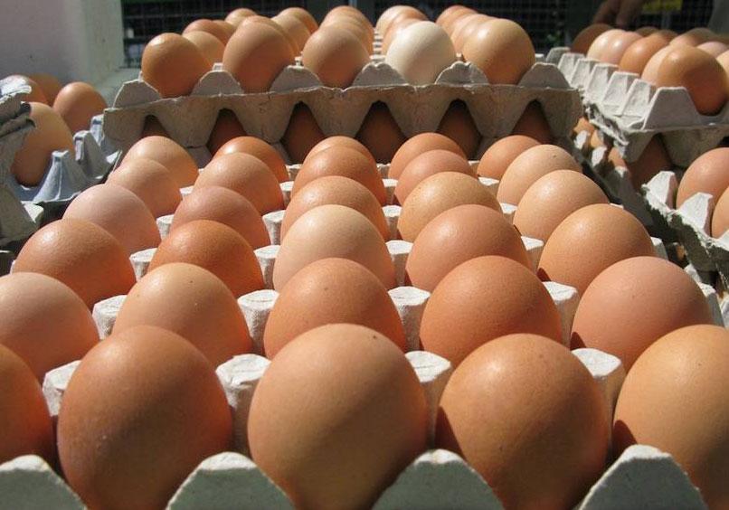 Shipping Cartons for eggs